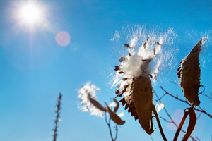 Conceptual autumn theme for background. Dry plant against blue sky with sun