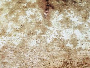 Concrete Background Texture 42