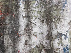 Concrete Background Texture 51