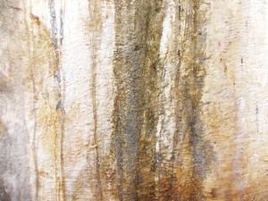 Concrete Surface 2