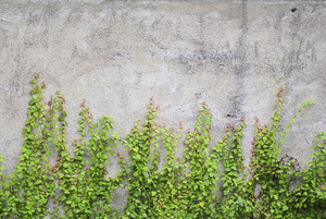 Concrete wall with tree