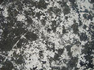 Concrete_dry_moss_texture