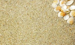 Corner Sea Shell