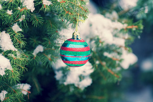 Covered with snow fir tree branch decorated with christmas ball