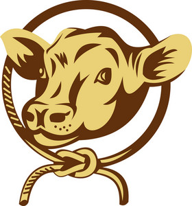Cow Mascot With Tied Square Knot Rope