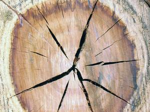 Crack_wood
