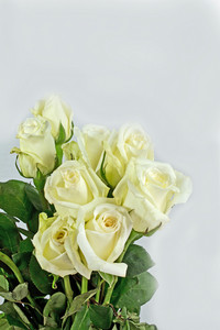 Cream Roses Bouquet