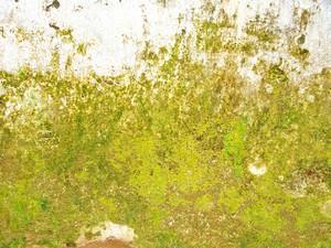 Creative_lichen_grunge_texture