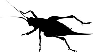Cricket Silhouette