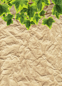 Crumpled Paper And Border Made Of Green Ivy (leaves With Clipping Path)