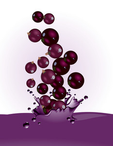 Currant Splash. Vector.