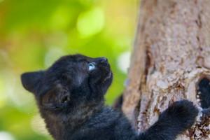 Cute black kitten climbing on the tree