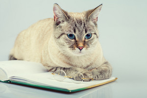 Cute business cat reading notebook (book)