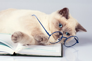 Cute business cat wearing glasses
