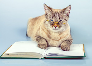 Cute business cat with glasses lying on the notebook (book)