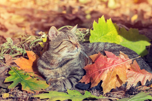Cute cat covered with leaves lying in the park