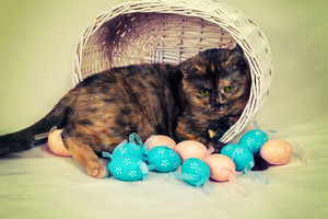 Cute cat in a basket with colored eggs