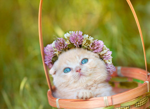Cute cat in basket