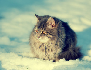 Cute cat on the snow