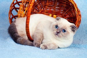 Cute cat relaxing in a basket