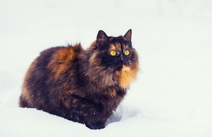 Cute cat walking on the snow
