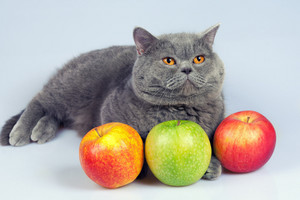 Cute cat with colorful apples