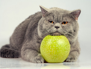 Cute cat with green apple