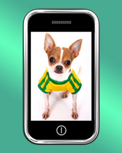 Cute Chihuahua Dog Photo On Mobile Phone