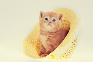Cute kitten in straw hat