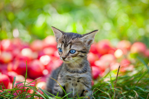 Cute kitten in the apple orchard