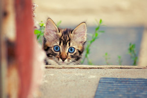 Cute kitten in the yard