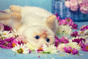 Cute kitten lying on the back among flowers