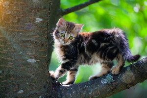 Cute kitten on a tree branch