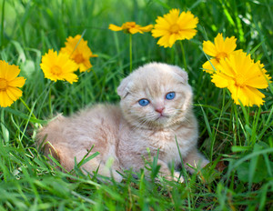 Cute kitten on the grass with flowers