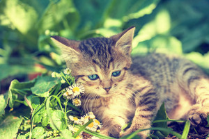 Cute kitten on the green lawn