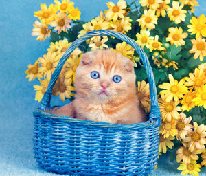 Cute kitten sitting in a basket near yellow flowers