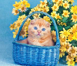 Cute kitten sitting in a basket near yellow flowers