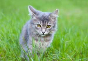 Cute kitten sitting in the grass