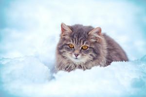 Cute kitten sitting in the snowdrift