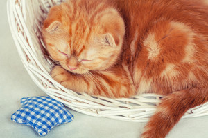 Cute kitten sleeping in the basket