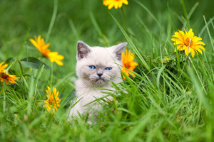 Cute kitten walking in the flower lawn