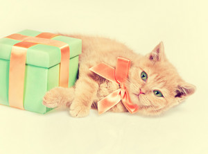 Cute kitten wearing bow ribbon lying near present box