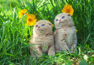 Cute kittens on the grass with flowers