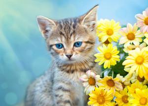 Cute little cat sitting near yellow flowers