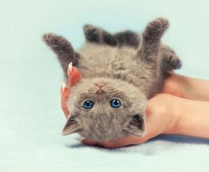 Cute little kitten in female hands