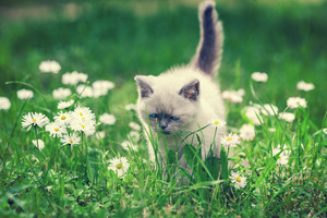 Cute little kitten in the daisy flower lawn