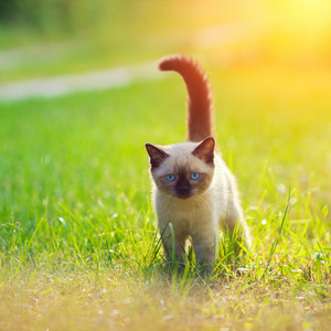 Cute little kitten in the green lawn