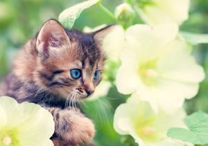 Cute little kitten in the mallow