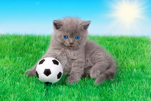 Cute little kitten playing soccer