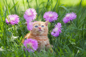 Cute little kitten sitting in flowers in the garden